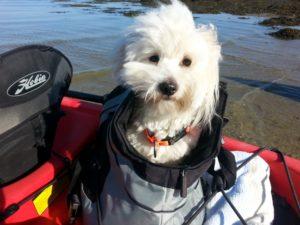 chien-kayak-mer