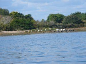 ile-oiseaux